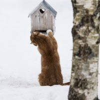 Lassi-kissa lintulaudalla